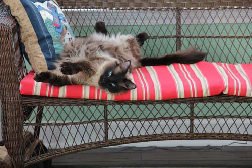 Siamese cat lying on a bench with red striped cushion.